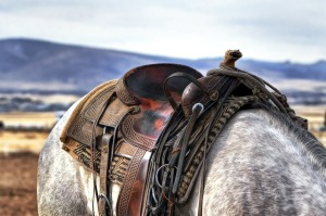 06b-horse